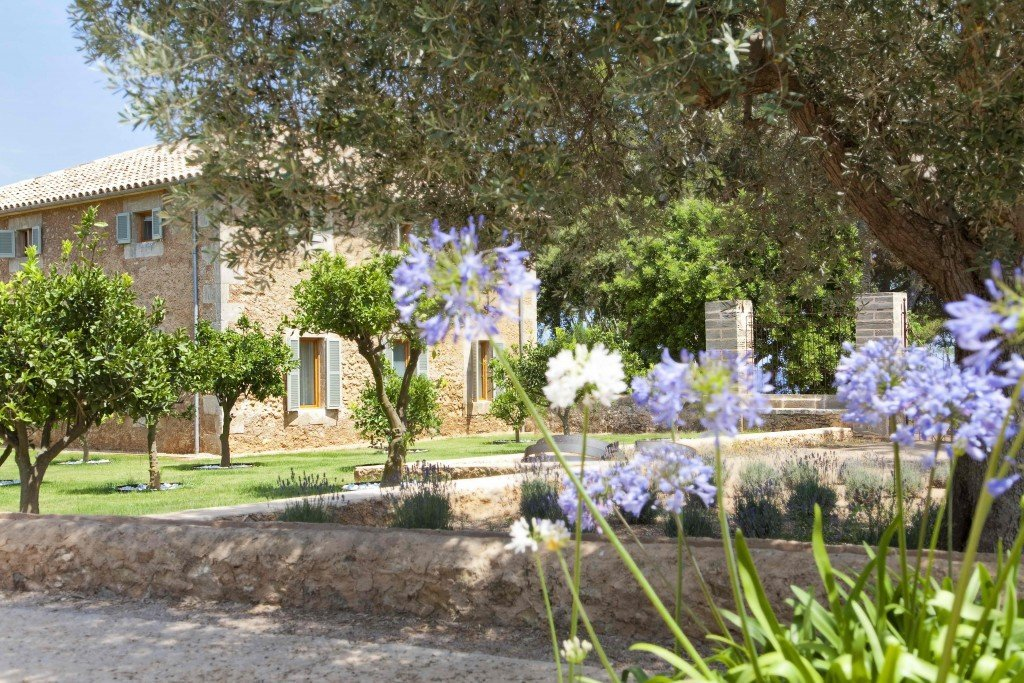 Alliums in bloom at Can Simoneta Upgrades Cava Offers with MallorcanTonic