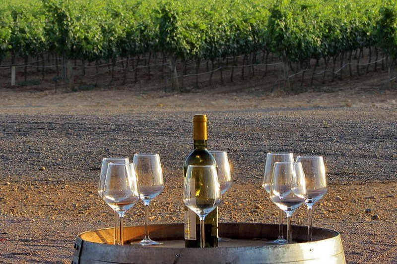 Tasting the wine - Mallorca Wine Tours